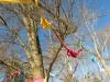 15_1698_Hope-Tree_2014